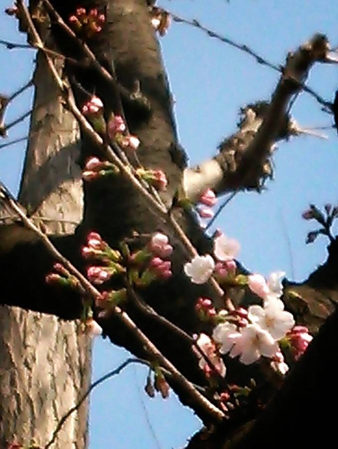 If you take a close look, you can see an elephant with red eyes hiding up the cherry tree